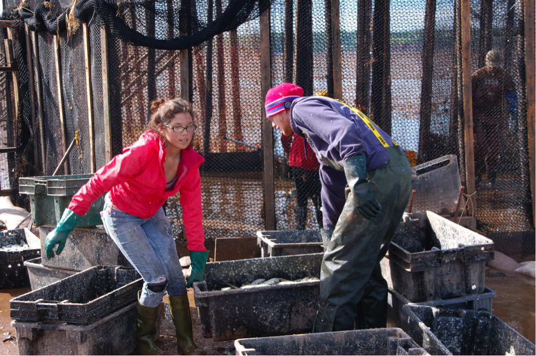 Two young fishers working a weir—an ancient low-impact fishing method—on the Bay of Fundy in Nova Scotia.