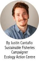 Justin Cantafio_Blog Author_En